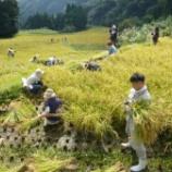 『稲刈りのお礼と その後の脱穀』の画像