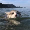 【事件】飼い猫を無理に泳がせ、SNSに投稿男逮捕!(画像)