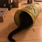 ドレミの日記 ~no cat no life. I am a widow.~