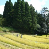 『二日間、雨が降っていますが、稲刈りのときの写真をご紹介します』の画像