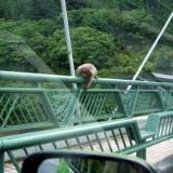 奥多摩湖でお猿さんに遭遇