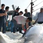 【韓国】クジラ混獲「韓国1960頭:日本100頭」、たまたま日本の20倍捕れました! [海外]