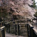 『花見』の画像