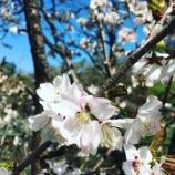 『先週、お花見をしました』の画像