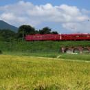 稲穂とことこと列車