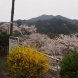 『桜の名所を訪ねて2013』の画像