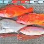 久々の凪の絶好の釣り日和に多彩な釣り方で魚種も多彩!