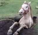 【画像】馬がうまる