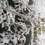 『三寒四温』の画像