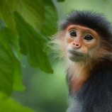 『人間社会と野生猿の腸内細菌』の画像