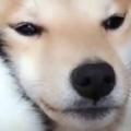 2匹の犬はとっても仲良しだった。ぎゅぎゅ~♪ → 1匹はこんな顔…