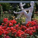 『マクロで荒ぶる2012年の薔薇 〜生田緑地ばら苑にて』の画像