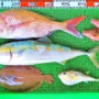 タイラバでロクマル真鯛!テンヤでゴーマル真鯛!湾内キスは2桁釣果がチラホラと!