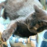 『きょうのいちまい・黒毛和猫』の画像