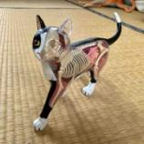 『猫の模型』の画像