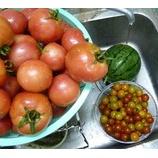 『夏野菜の収穫のピークがきている。』の画像
