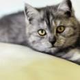 韓国、「ペット税」導入以外にも虐待の罰則強化へ