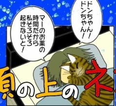 顔の上の猫
