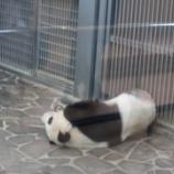 『パンダのタンタン🐼を見に、王子動物園へ』の画像