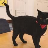 『イギリス財務省の猫がいきなり人気一位に。』の画像