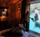 ホッキョクグマと一晩過ごす宿泊プラン 一泊2万9000円から