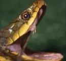 【兵庫】公園で毒ヘビにかまれ小5男児が意識不明の重体 ヤマカガシか