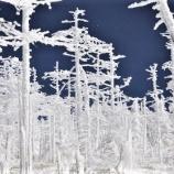 『冬の八ヶ岳の白い森での至福体験』の画像