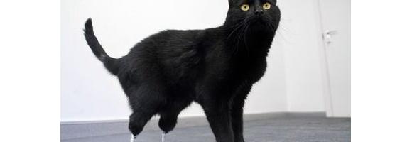 足失った黒猫にバイオニック義肢 動画もあり