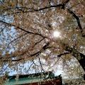 御茶ノ水の大至(百名店 醤油らーめん)