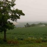『【北海道ひとり旅】上川の旅『就実の丘』のんびりと田園風景を愉しむ』の画像