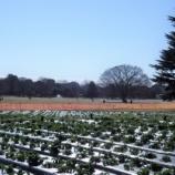 『1月の国営昭和記念公園Ⅲ;立川市』の画像