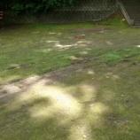『草むしり』の画像
