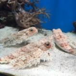 『深海水族館☆』の画像