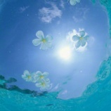 『海の中にいるみたい⁉︎ 水中をイメージした涼しげなお部屋作り 【インテリアまとめ・インテリアショップ ハリー 】』の画像