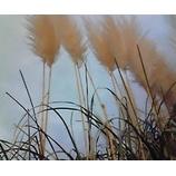 『色なき風』の画像