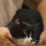 『猫 くろみつ』の画像