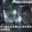 【武蔵小杉】浸水原因は多摩川の水 排水管逆流 川崎市は逆流を防ぐためのゲート閉じず
