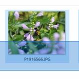 『ソフトを使わずに複数の画像から特定のEXIFを削除する』の画像