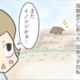 『遭遇したらテンション上がる野生動物』の画像