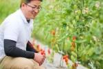 交野市倉治にある『大矢農産のトマト』はめっちゃ美味しいらしいので農園に行ってみた!〜交野さんぽ・素敵なトマト♪編〜