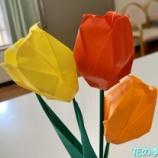 『花の季苑/折り紙のチューリップを作りました!』の画像