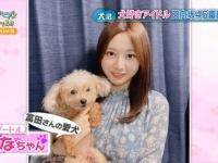【日向坂46】富田鈴花の愛犬になちゃん、全国区へwwwwwwwwww