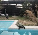 【悲報】鶴は千年、亀は万年はフェイクだった 天王寺動物園園長が認める