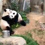 『【香港最新情報】「「海洋公園(オーシャンパーク)のパンダ、初の自然交配を確認」』の画像