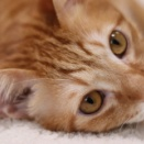 ■我が猫の可愛い写真8連発■
