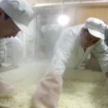 『麹作りは経験がモノを言う』の画像
