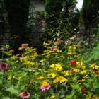 『ユリの増やし方と植え替え時の古い土の使い方、病害虫対策』の画像