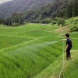 『梅雨明け後の田んぼの様子』の画像