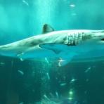 サメ好き[ひら]の水族館ブログ