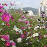 『青空に一番似合う花』の画像